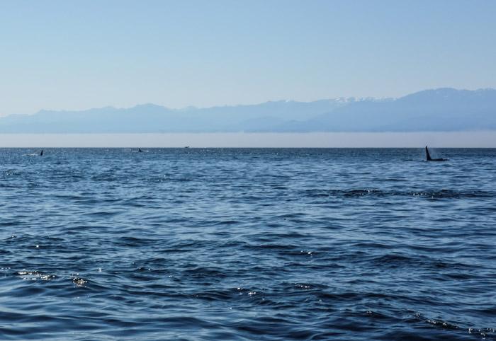 Fishing_pedderbay-0658