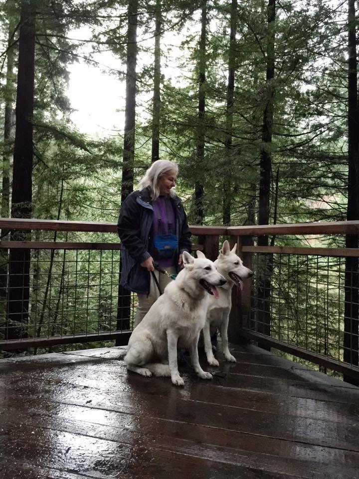 Mom_dogs