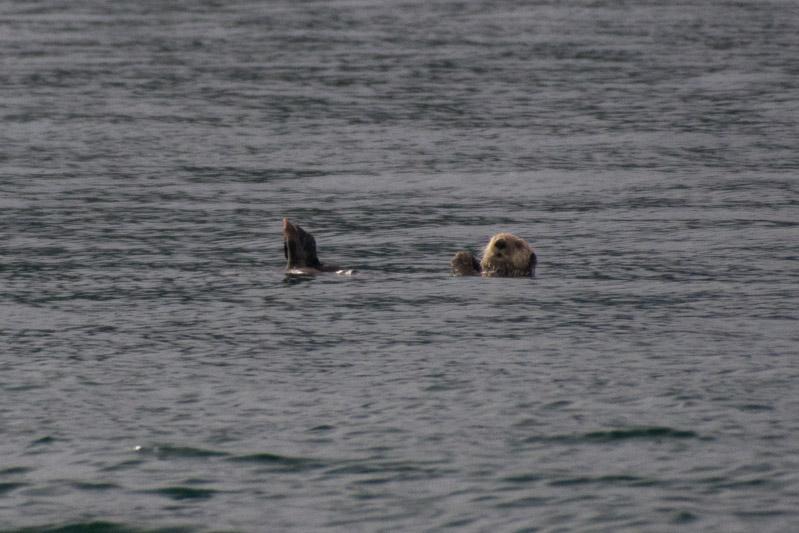 Otters-7928