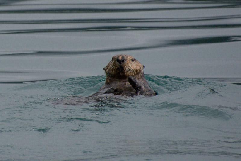 Otters-8012