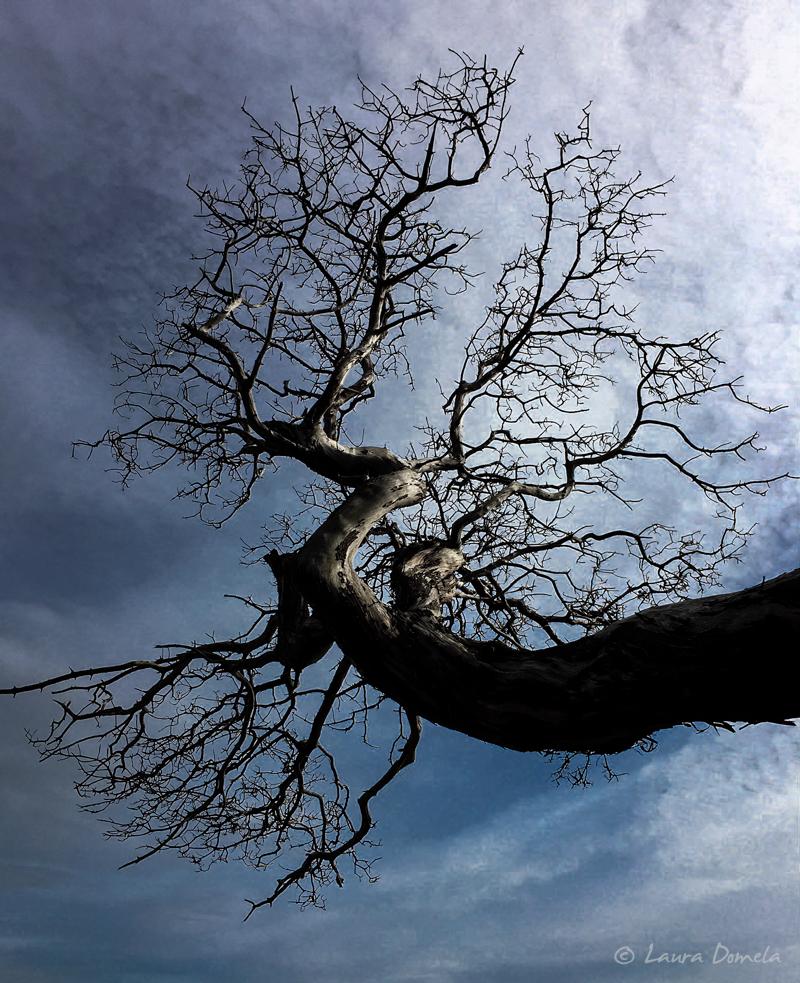 Cypress-0569
