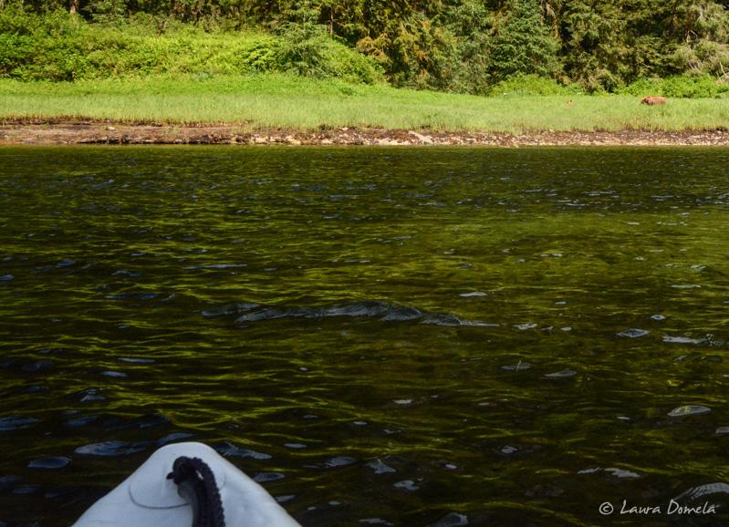 Kayaking_mistyfjords-1522